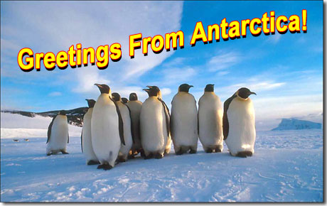 Penguin postcard from Antarctica